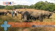 Los Búfalos de San Rafael de Río Cuarto qn-Los Búfalos de San Rafael de Río Cuarto-080319