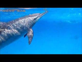 """Nooraya et """"mes"""" dauphins"""