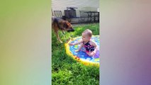 Funny Babies and Dogs are Best Friends - Fun and Fails Baby Video_2019