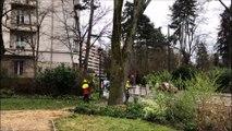 Abattage d'un tilleul vieux d'une cinquantaine d'années dans le parc du casino à Besançon