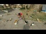 صدى البلد - شاهد ..ليبي يحول منزله إلى ملجأ لقطط الشوارع الجريحة