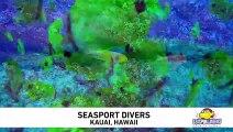Seasport Divers Signature Dive at Lehua Rock