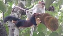 Un singe curieux vient embêter un écureuil qui mange