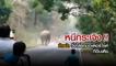 หนีกระเจิง !! ช้างป่า วิ่งไล่รถมอเตอร์ไซค์ ที่อินเดีย