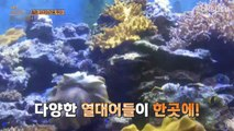 Travel The World on EXO's Ladder S2 E37