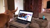 Ces chats deviennent fous en voyant un autre chat dans l'écran