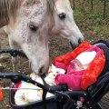 Ce bébé caresse un cheval avec ses toutes petites mains !