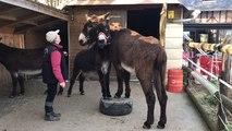 L'âne agility : Christiane Berthier fait danser ses ânes