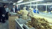 Tarım ve Orman Bakanı Pakdemirli - Buğday ve arpa fiyatında çiftçiye müjde - İZMİR