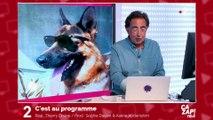 Philippe Etchebest et Michel Sarran se chamaillent - ZAPPING TÉLÉ DU 14/03/2019