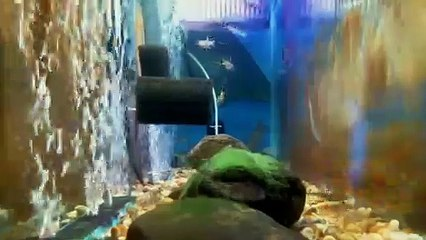 EPCAMR's Brook Trout Tank Live Stream 03/14/19