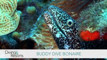 World's Best Diving & Resorts: Buddy Dive Bonaire