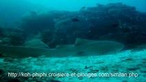 les raies mantas et requins léopards amoureux de koh bon aux îles similans en Thaïlande