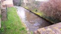 Les rivières en crue dans le secteur d'Obernai/Molsheim 16 mars 2019