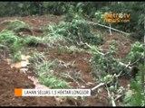 Lahan Seluas 1,5 Hektare Di Gunung Wilis Longsor