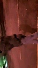 Lance Wiggins  Dances outside to show his talent.