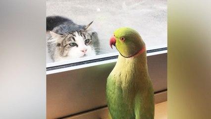 Frecher Papagei spielt Verstecken mit Katze