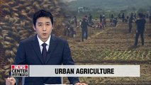 Seoul to support urban garden farming, beekeeping and insect breeding
