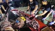 40 kg de plastique retrouvés dans l'estomac d'une baleine