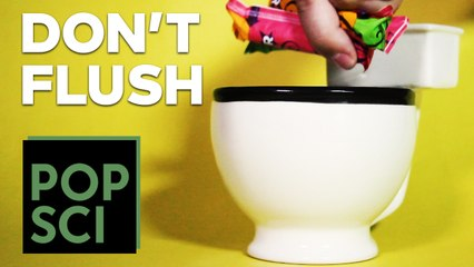 Never, EVER Flush These Things Down a Toilet