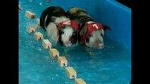 Piggy Olympics