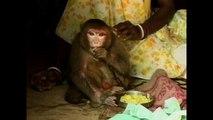 Woman Adopts Monkey