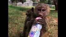Baboon Adopts Bushbaby