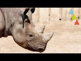 10 animales que se extinguieron por culpa del hombre