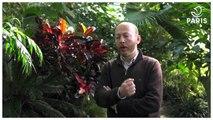 Régis Crisnaire, le botaniste du jardin botanique de Paris