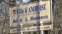 Amboise : le mystère des deux corps calcinés