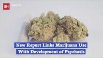 Marijuana Use Study Report Highlights Serious Dangers