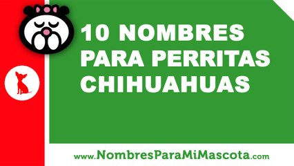10 nombres para perritas chihuahuas - nombres de mascotas - www.nombresparamimascota.com