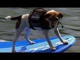 Meet the Guinness Record holder for being most extreme sports dog