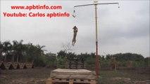 American Pit Bull Terrier - APBT - PITBULL