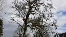 Abattage d'arbres dans le parc thermal de Contrexéville ce mardi 26 mars