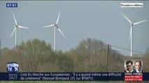 Les éoliennes ont-elles un effet néfaste sur les animaux ?