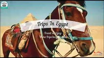 Magical Abu Simbel Tour from Cairo