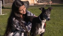 Where Greyhounds Find Love After Life On The Track