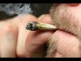 Miles de personas ya disfrutan de cannabis legal en Canadá | Noticias con Francisco Zea