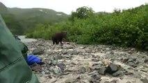 Un Grizzly énorme se met à courir vers ces touristes