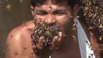 VIDÉO : un apiculteur se filme en train d'avaler des centaines d'abeilles