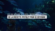 Les États-Unis veulent utiliser l'incroyable capacité des crevettes-pistolets pour se défendre