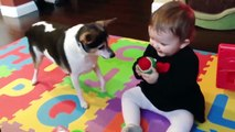 Funny Babies and Naughty Dogs are Best Friends - Fun and Fails Baby Video