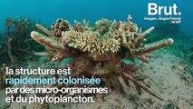 Les récifs artificiels, un moyen de repeupler les fonds marins