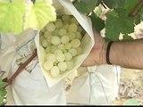 Las uvas de la suerte ya están preparadas