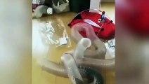 Deux furets jouent dans un tuyau en plastique !