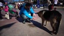 Tuzla Sahil'de insanın içini ısıtan görüntüler...Susamış köpek, adamın avucundan kana kana su içti