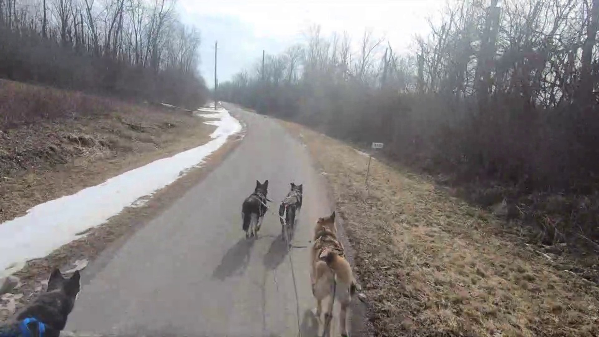Dry Land husky run February 23, 2019