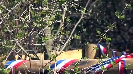 Un arbre planté à Auxerre contre l'antisémitisme : la bête est toujours là ...