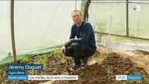 Haute-Saône : des morilles cultivées sous serre